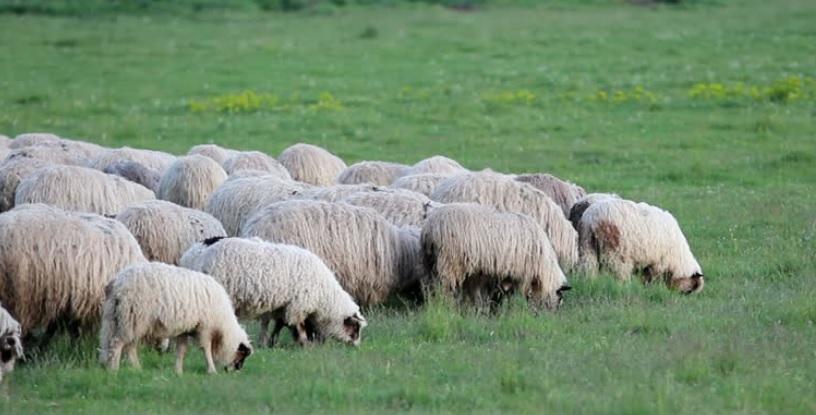 herd_behavior